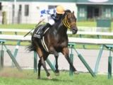 【次走】ワントゥワンは阪神牝馬Sへ 2年連続の出走