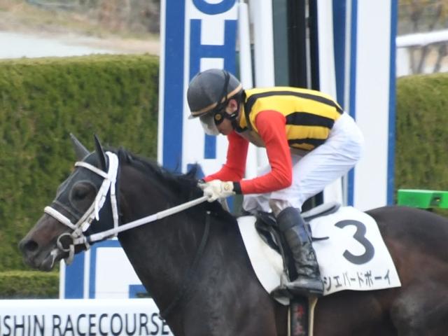 伯母に重賞馬のウイングレットがいるシェパードボーイ(c)netkeiba.com