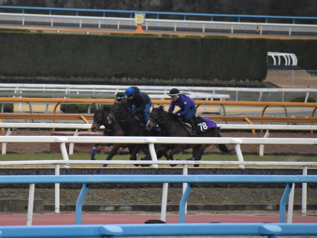 ポリトラック馬場で追い切りを行ったウーリリ(写真奥、撮影:井内利彰)