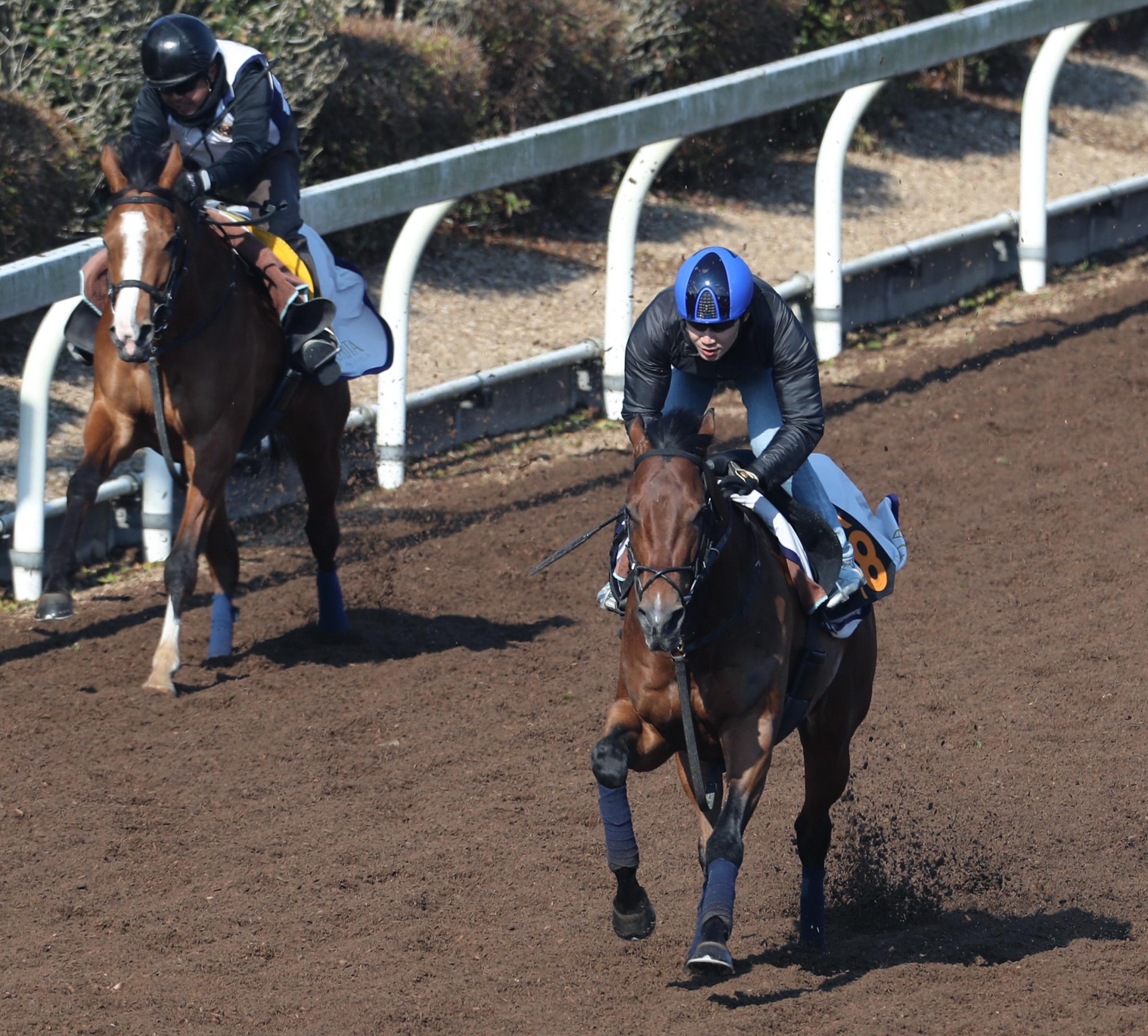 田辺騎手を背に、坂路でチビノヴァルタン(左)を突き放すヴァッシュモン