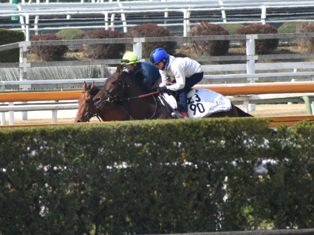 ストライドの大きなフットワークで走るケイデンスコール(写真奥、撮影:井内利彰)