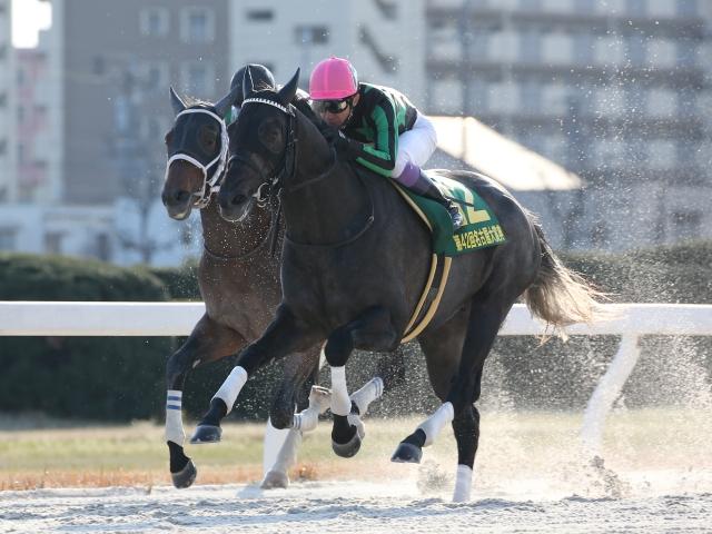 1馬身半差での決着となった名古屋大賞典を制しダートグレード3勝目を飾ったグリム(撮影:稲葉訓也)