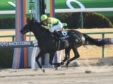 【高知・黒船賞】サクセスエナジーは3枠3番、ヤマニンアンプリメは1枠1番/地方競馬枠順確定