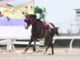 【笠松・マーチC】キングヘイロー産駒メモリージルバが4馬身差V&重賞連勝/地方競馬レース結果