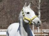 種牡馬生活送るスノードラゴン、レックススタッド到着
