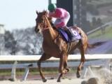 【笠松・新緑賞】サウスグラストップが断然人気に応え8馬身差V/地方競馬レース結果