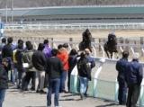 JRA日高育成牧場で「育成馬展示会」、2歳馬51頭がお披露目