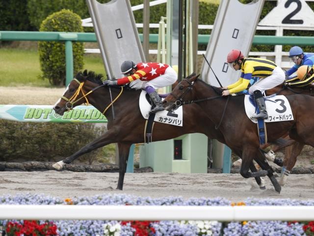 江田照男騎手騎乗の2番人気カナシバリが勝利(c)netkeiba.com、撮影:下野雄規