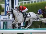 【船橋・マリーンC】オウケンビリーヴが1倍台の予想1番人気 中央馬3頭が上位に/地方競馬予想オッズ