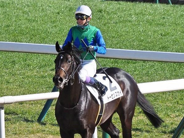 トーセンラー産駒初の重賞制覇を目指すトーセンスカイ(写真は2019年新馬戦出走時、ユーザー提供:ソマリさん)