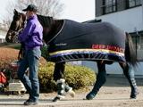ディープインパクト産駒がJRA重賞200勝、種牡馬史上2頭目