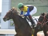 【青葉賞】登録馬 ウーリリ、ランフォザローゼスなど16頭