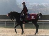 【次走報】ダノンプレミアム、安田記念へ。鞍上は引き続き川田騎手