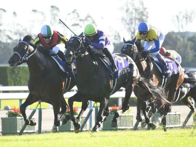 菊花賞、ゴール前で激しく叩き合う三頭