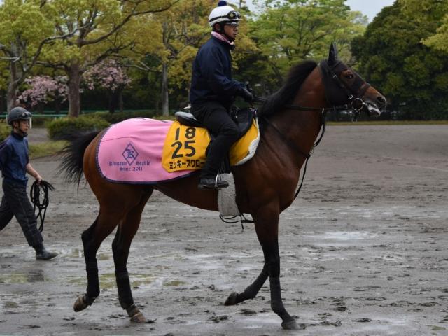 有馬記念以来の久々のレースも乗り込み量は十分なミッキースワロー(撮影:佐々木祥恵)