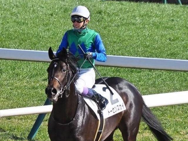 2戦目の前走で勝ち上がったトーセンスカイ(写真は3歳新馬出走時、ユーザー投稿写真:ソマリさん)
