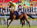 【海外競馬】G1・3勝のドゥーナデンが死亡 2013年のジャパンCにも出走