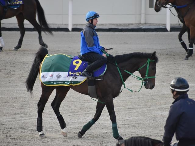 日本ダービーに向けて調整中のサートゥルナーリア(撮影:井内利彰)