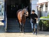 【JRA】日本ダービーに出走予定の関西馬、全馬が東京競馬場に到着