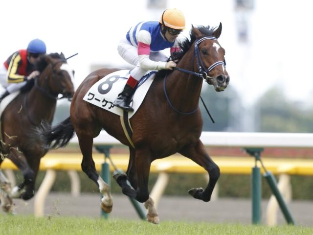 C.ルメール騎手騎乗の1番人気ワーケアが新馬勝ち(c)netkeiba.com、撮影:下野雄規