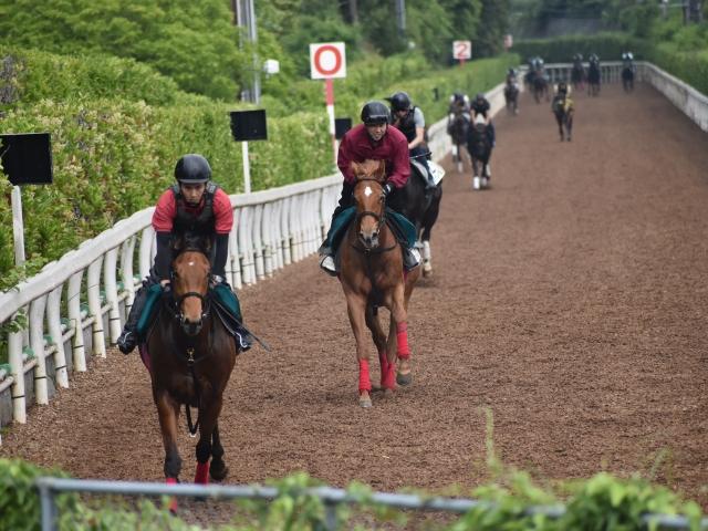 入厩1週間でゲート試験に合格したグランセニョリータ(写真中央、撮影:井内利彰)