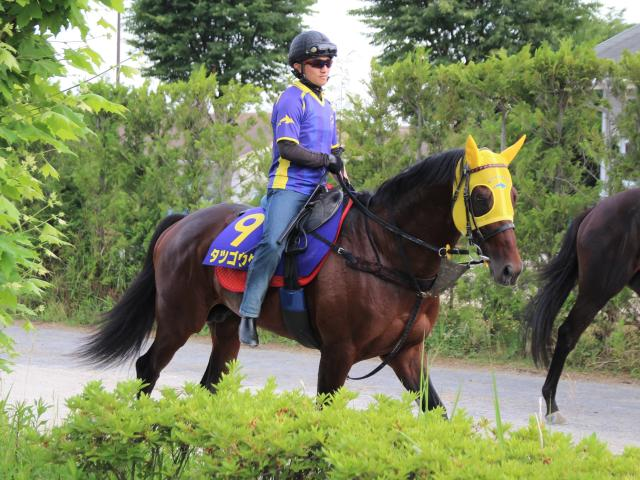 昨年の同レース以来、1年ぶりの出走となるタツゴウゲキ(撮影:花岡貴子)