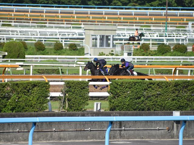 横山典弘騎手とのコンビに新味あるエタリオウ(写真奥、撮影:井内利彰)
