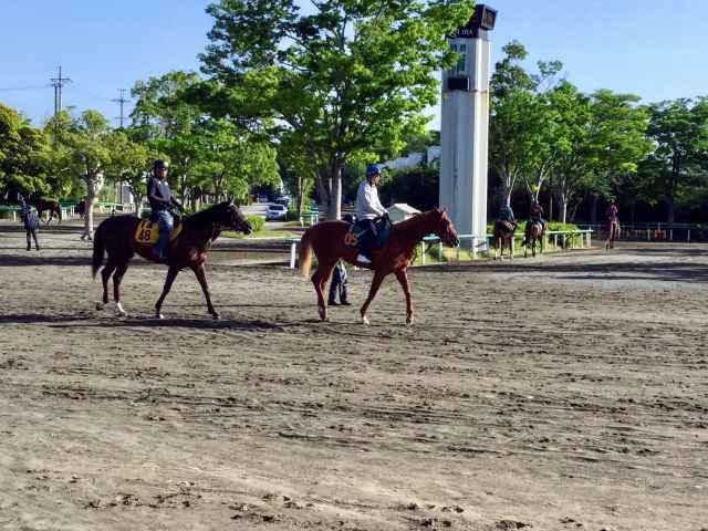 青木孝文厩舎所属のウイングレイテスト。半兄ベストメンバーは京都新聞杯の勝ち馬(写真中央、撮影:竹之内元)
