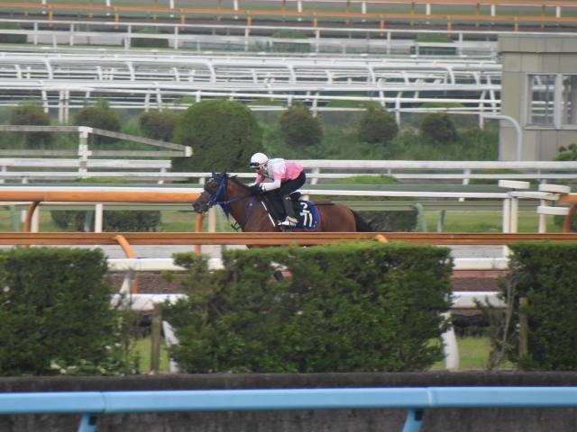 高橋厩舎の連覇に向けて順調な調整を見せるギルマ(撮影:井内利彰)