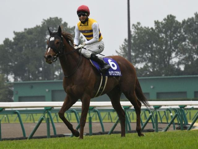 セイウンコウセイはメンバー中唯一のGI馬(写真は2017年高松宮記念優勝時)