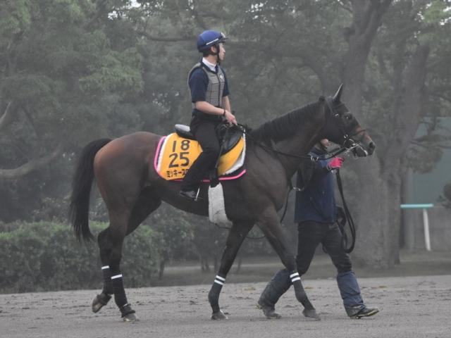 菊沢騎手と一昨年以来のコンビで七夕賞に挑むミッキースワロー(撮影:佐々木祥恵)