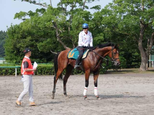 田村康仁厩舎所属のシアンフィデール。母はクイーンCやスイートピーS優勝馬のライラプス(撮影:竹之内元)