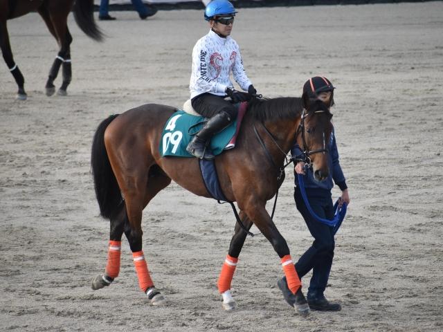 レースで騎乗予定の福永祐一騎手が跨り鋭い伸びを見せたサマービート(撮影:井内利彰)