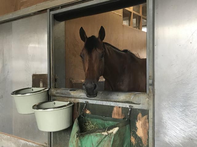 濱田助手も「自分らしい競馬をしてくれるんじゃないか」と期待しているクリソベリル(撮影:花岡貴子)