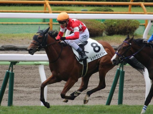 函館芝1200mの新馬戦を好タイムで制したレッドヴェイパー(ユーザー投稿:ひいちきん)
