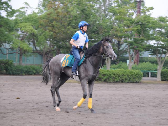 調教に騎乗した柴田大知騎手も「初戦から楽しみです」と期待をよせるスマイルカナ(撮影:竹之内元)