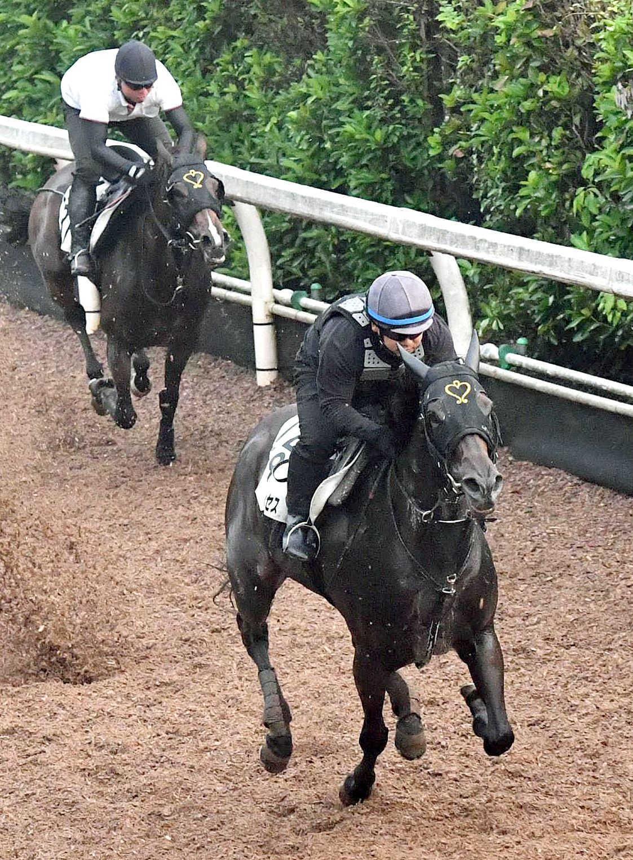栗東坂路でラブカンプー(左)を突き放したダイメイプリンセス