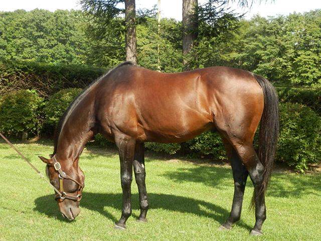 種牡馬としても多大な功績を残したキングカメハメハ(ユーザー提供:マロンヘアさん)