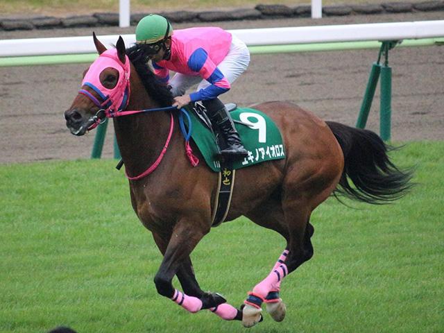 JRA唯一の現役11歳馬ユキノアイオロスが抹消(写真は2019年函館SS出走時、ユーザー提供:ひいちきんさん)