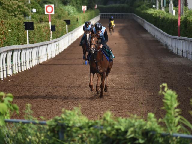 牝馬2冠馬カワカミプリンセスを母に持つグランプリアルザン(撮影:井内利彰)
