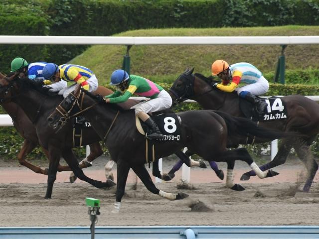 鮫島良太騎手騎乗の3番人気タガノファジョーロが勝利(c)netkeiba.com