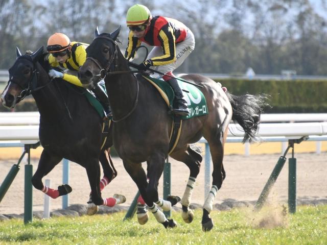 前走高松宮記念でも良く差してきていたデアレガーロは、上位争いが十分に可能である