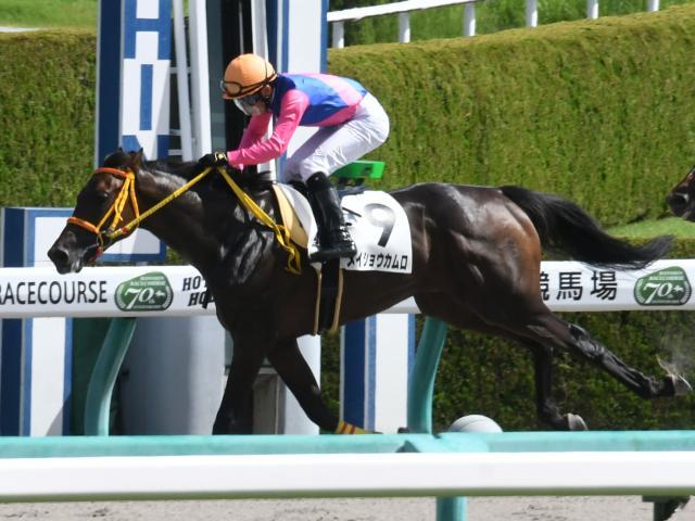 阪神1Rを制した団野大成騎手騎乗のメイショウカムロ(c)netkeiba.com