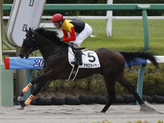 中山1Rは勝浦正樹騎手騎乗のアポロセイランが人気に応えて勝利(c)netkeiba.com、撮影:下野雄規