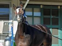 【愛チャンピオンS】ディアドラ猛追及ばず4着 1番人気の地元馬マジカルがV