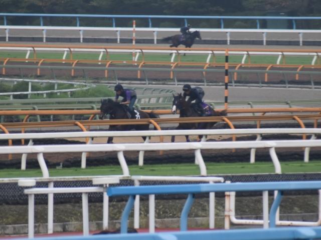 富士Sへ出走予定のアドマイヤマーズ(写真右、撮影:井内利彰)