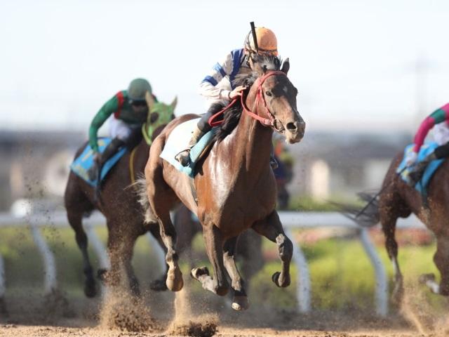 山田敬士騎手が5番人気シェナフウジンで勝利(撮影:高橋正和)
