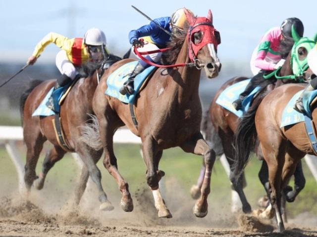 小林凌大騎手が6番人気ウインストロベリーで勝利(撮影:高橋正和)