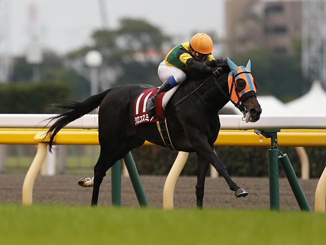 2年前の府中牝馬Sを逃げ切って、重賞初勝利を挙げたクロコスミア。それ以来、勝利から遠ざかっており、一昨年の再現を期待したいところ。(撮影:下野雄規)