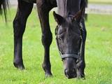 シンボリクリスエスが種牡馬引退 産駒にエピファネイア、ルヴァンスレーヴなど